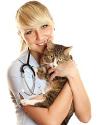 Si vous aimez votre chat, vous devez l'assurer !