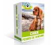 Formation vidéo : bien éduquer son chien