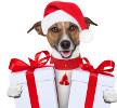 Avec la Woufbox, c'est Noël toute l'année pour votre chien !