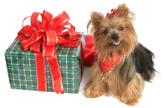 Votre chien aime les surprises ?