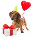 Recevez chaque mois des cadeaux pour votre chien !